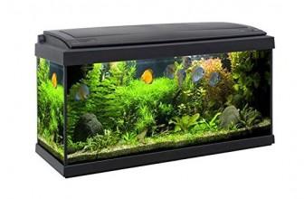 ¿Cómo montar un acuario en casa? Tutorial paso a paso para tener tu propio acuario